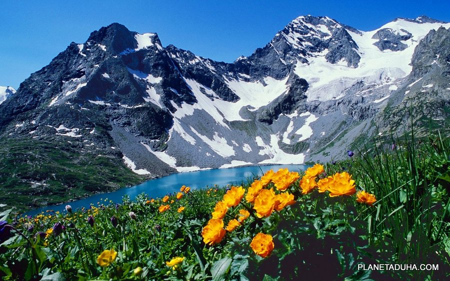 Цветущий Высокогорный Алтай