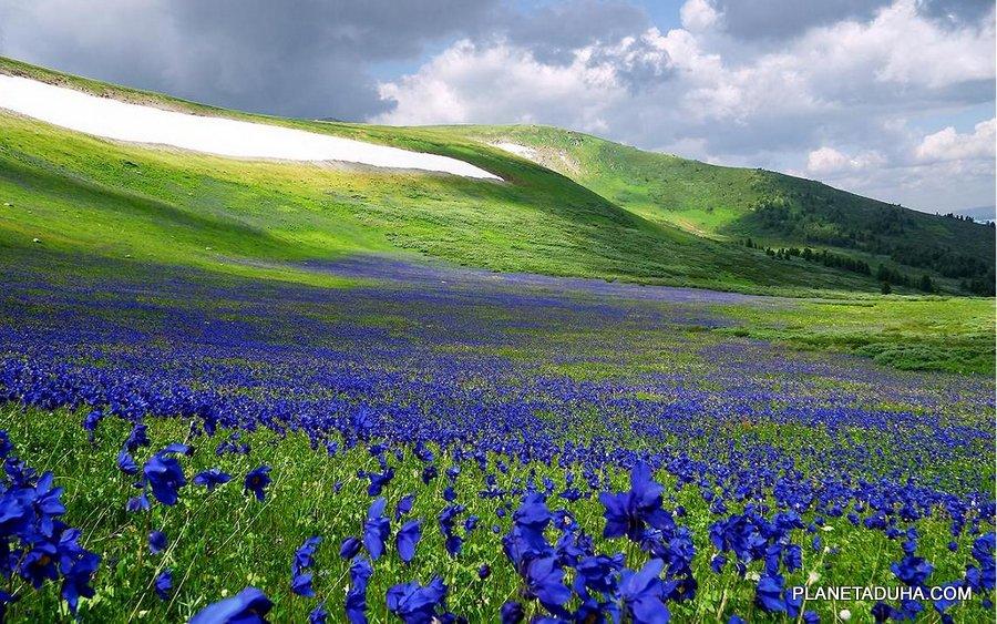 Весна на плато Укок - Горный Алтый