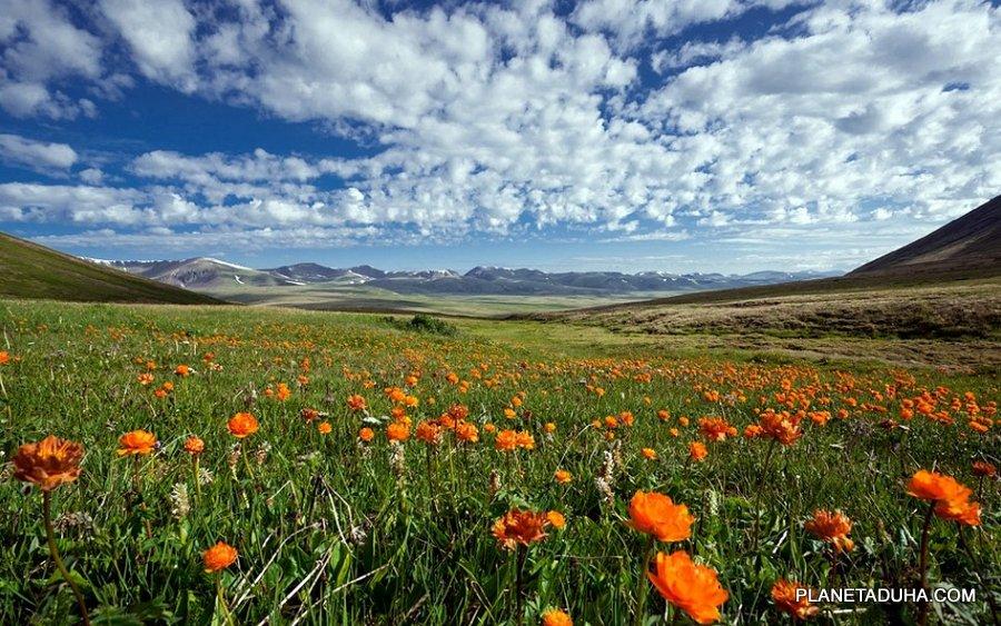 Весна на плато Укок - Горный Алтай