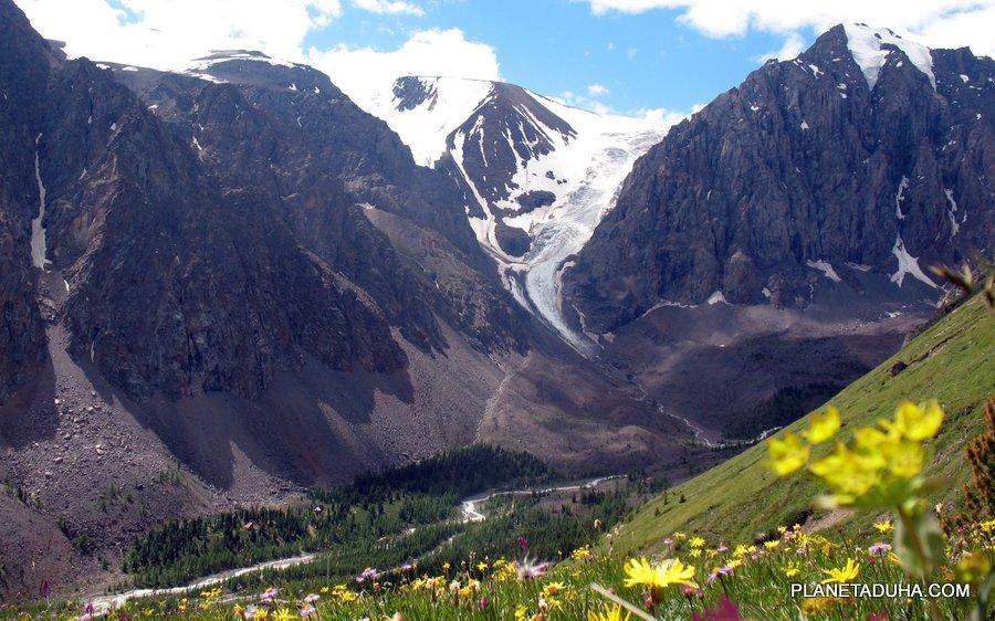 Альпийские луга Горного Алтая