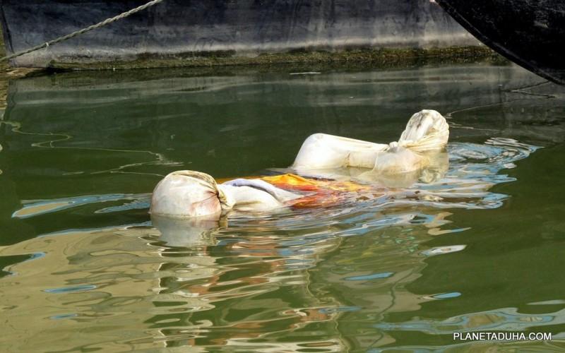 Плывущие тела по Гангу - обычная картина в Варанаси