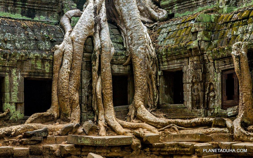 Все в этом мире подвластно природе - даже стены великого Ангкора
