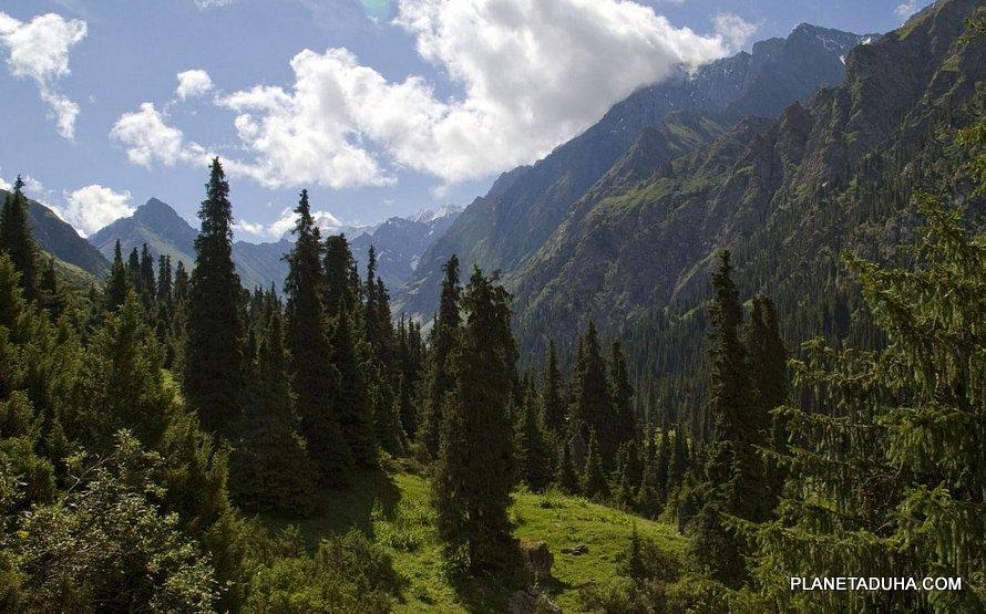 Реликтовые лесные угодья ущелья Алтын-Арашан