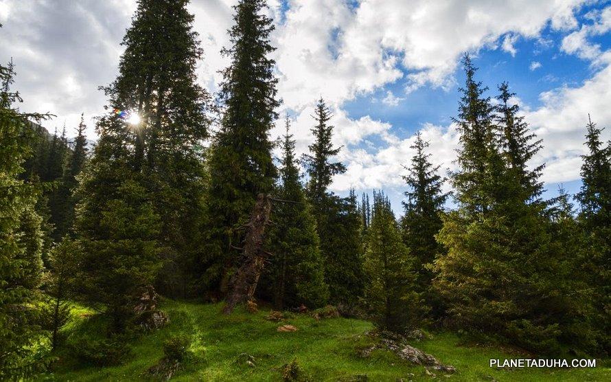 Волшебный лес Алтын-Арашана
